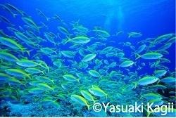 photograph by Yasuaki Kagii